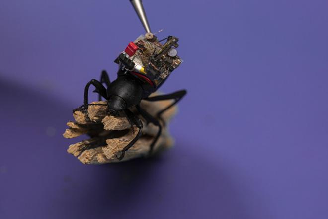 chế tạo camera siêu nhỏ giống bọ cánh cứng